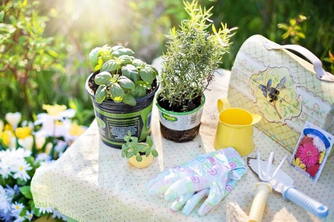 planting-780736_960_720