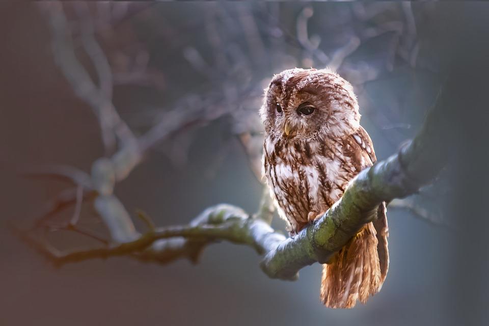 Moudrost přírody
